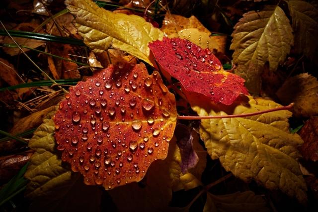 ©  - Осенний вид на лесную подстилку. Макро-режим объектива Coolpix A обеспечивает близость фокусировки до 10 см.