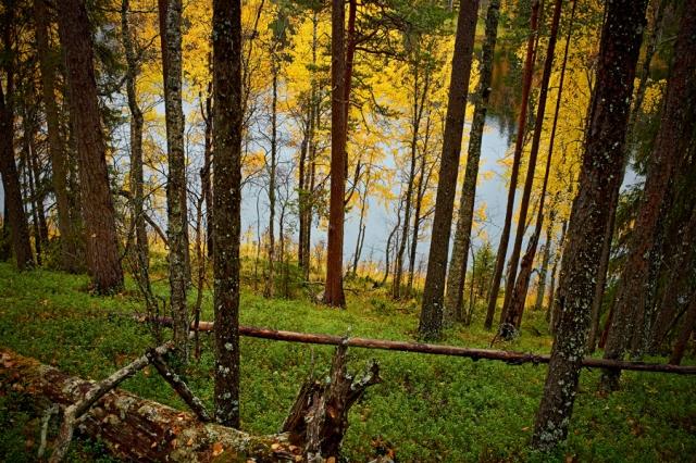 ©  - Осень у Тайвалконгас. Многообразие деталей и цветов для этой камеры не проблема, а её объектив позволяет не терять чёткости линий даже на г�