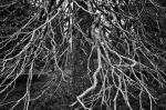 ©  - Высохшая ель в тундре. Высокий динамический диапазон позволяет также получать поразительные чёрно-белые кадры.