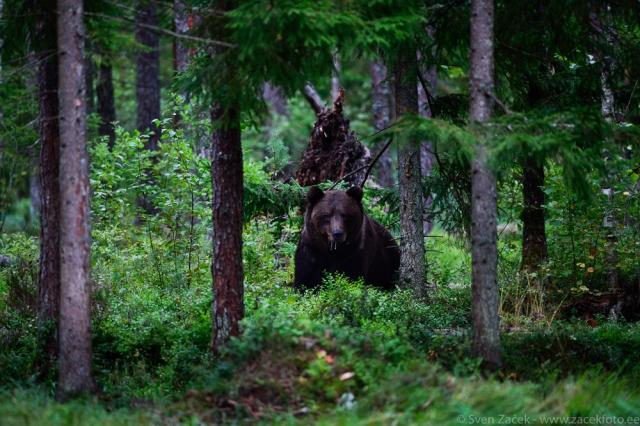 © Sven Začek - Nikon D810A + Nikkor 400mm F2,8 VR FL. F2,8, 1/125, ISO 3200.