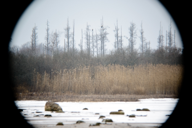 © Triin Leetmaa -  Kuni 800 mm ei kata vaatlustorust paistev pilt kogu kaamera sensorit. Pildi kvaliteet langeb servade suunas. Nikon D800, EDG 85A + FSA-L2 @500 mm; F5,9; 1/15s; ISO100