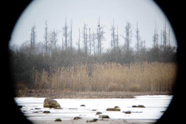 © Triin Leetmaa -  До 800 мм изображение, видимое через зрительную трубу, не покрывает площадь матрицы фотокамеры. Качество фотографии снижается ближе к её угл