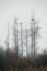 © Triin Leetmaa -  Два старых орлана-белохвоста под моросящим дождём. Этих птиц можно обнаружить на фотографии, сделанной с расстояния примерно в 700 м. Вращаю�