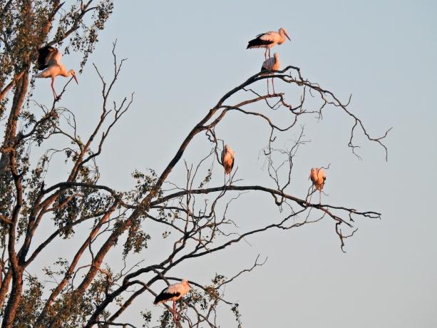 © Aivar Pihelgas -  800mm fookuskaugusega objektiiv annab võimaluse juba lindu detailsemalt vaadelda ja määrata.