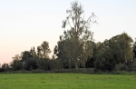 © Aivar Pihelgas -  115 mm juures võib vabalt juba toonekured kokku lugeda. Siis märkasin maapinnal liikumist. Kui teraselt vaatate, on kurepuu all märgata jänest.