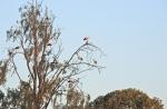 © Aivar Pihelgas -  Sellel pildil on näha juba lindudest detailid, linnuhuvilised saavad sellel pildil juba suuremaid linde täpselt vaadelda
